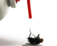 Les insecticides et désinfectants